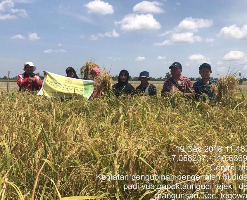 Kementan Kenalkan Varietas Unggul Baru M400 bagi Petani Grobogan