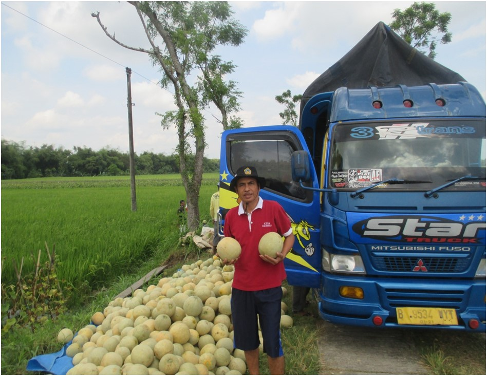 Petani Melon di Ngaringan, Meraup Untung di Tengah Pandemi Covid-19